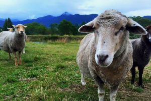 Trevena Glen Farm Animal Experience - Attractions Melbourne